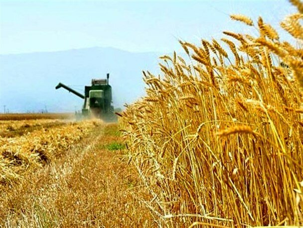 Iran to remain self-sufficient in wheat production this year: dep. min.