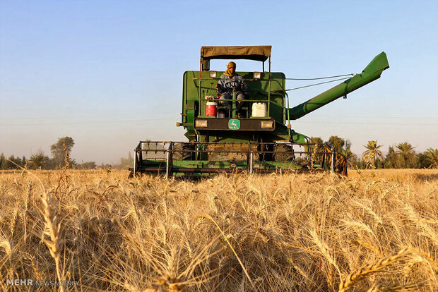 'Annual wheat production expected to exceed 11m tons by Mar. 2020'