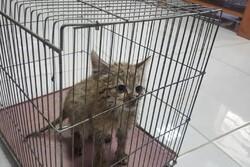 گربه وحشی نابالغ در فیروزآباد ازمرگ نجات یافت