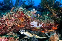 زیستگاههای اصلی مرجان های منزوی در خلیج فارس کشف شد