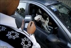 برای داشتن «حیوانات خانگی» باید «مالیات» بدهید