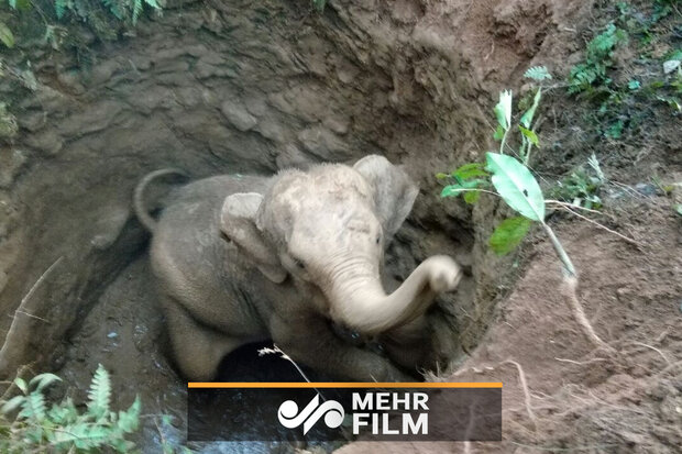 VIDEO: Baby elephant rescued in Sri Lanka