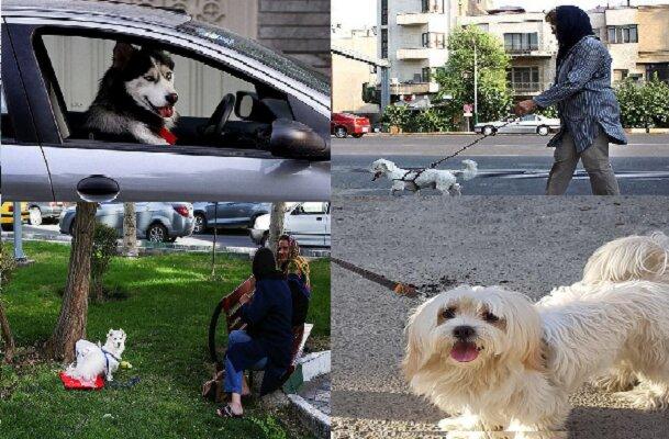 سگ گردانی سوغات تفکر غربی/برخورد قاطع از سوی نیروی انتظامی