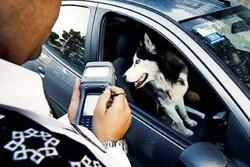 طرح ممنوعیت سگ گردانی در معابر عمومی استان سمنان اجرا میشود