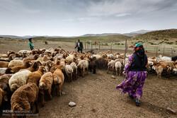 ۱۱۹ قشلاق بالای ۲۰ خانوار استان اردبیل به روستا تبدیل میشود