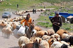 کوچ عشایر آذربایجان غربی به مناطق ییلاقی آغاز شد
