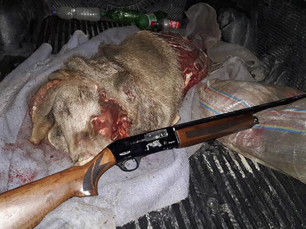 دستگیری یک شکارچی گراز و یک شکارچی کبک در حاشیه پارک ملی لار