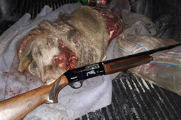 شکارچی حرفه ای خوک درجنگل های آمل به دام افتاد