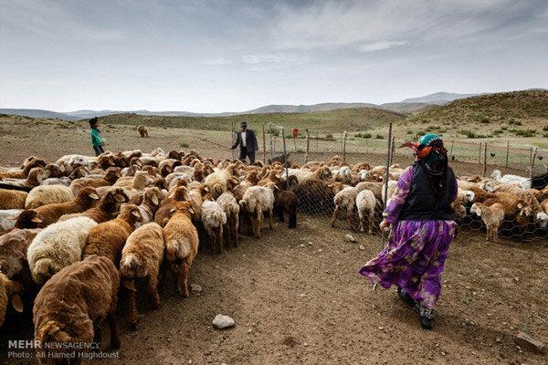 افزایش راندمان تولید عشایر ایلام/پرداخت ۲۱ میلیارد تومان تسهیلات