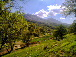 5-year plan launched to safeguard Zagros forests