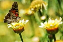 الفراشات يُزينّ قم/صور