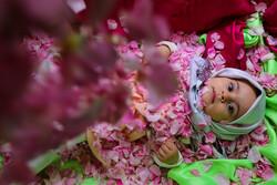 """مهرجان """"الورد الجوري"""" الثقافي في مدينة يزد / صور"""