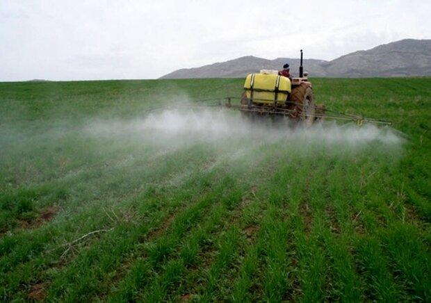 سمپاشی بیش از ۸۰۰۰ هکتار از مزارع کرمانشاه علیه بیماری «زنگ زرد»