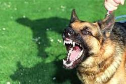 کراچی میں آوارہ کتوں نے گذشتہ 12 گھنٹوں ميں 59 افراد کو کاٹ لیا