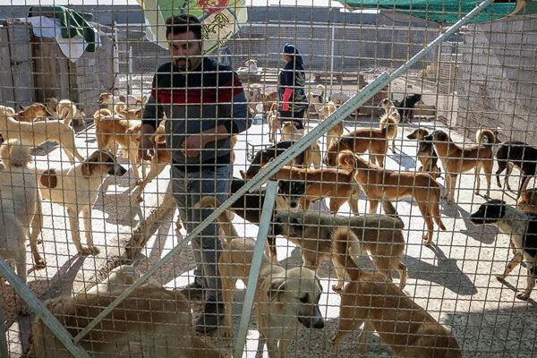 راهاندازی سامانه کنترل سگهای بدون صاحب در پایتخت