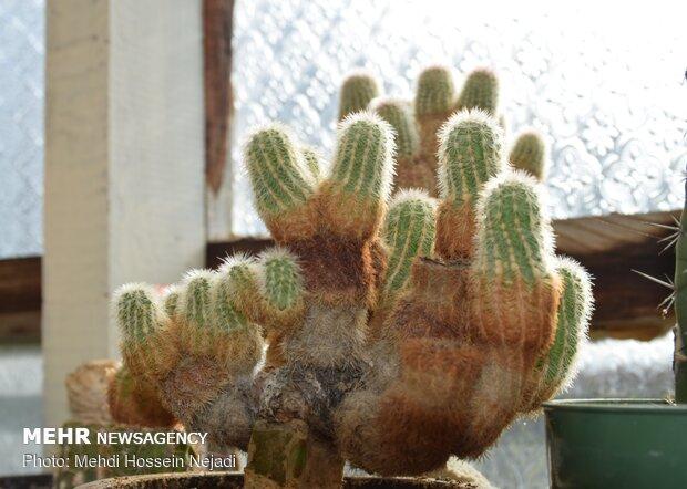 'Cactus paradise' in Astara