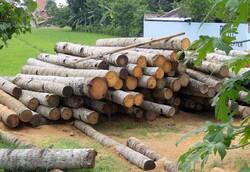 تکذیب قاچاق چوب در کرمانشاه /برخورد جدی با تولیدکنندگان زغال