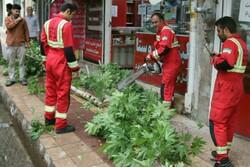 وزش باد شدید منجر به شکستن درختان و برخاستن گردوخاک در لرستان شد