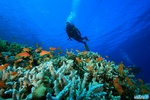 Corals bleaching, choking in Persian Gulf