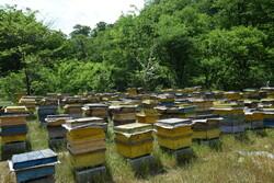 ۵۰ درصد از عسل استان تهران در شهرستان دماوند تولید میشود