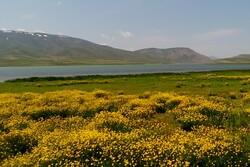 مستنقع جغاغور وسط إيران  يجذب السياح /فيلم