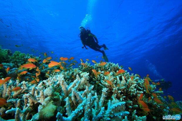 Corals bleaching, choking in Persian Gulf