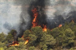 'Vast vegetation cover increases wildfire risk during summer'