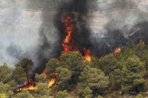 'Vast vegetation cover increases wildfire risk during summer'