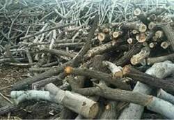 طرح موضوع قطع ۱۰ هزار درخت مسیر یاسوج به سی سخت اغراق آمیز است