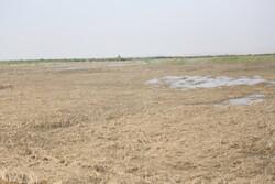 ۱۱ هزار کشاورز در خوزستان خسارت سیل خود را دریافت کرده اند
