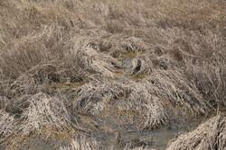 ۵۰ درصد خسارات سیل در بخش کشاورزی پرداخت شد