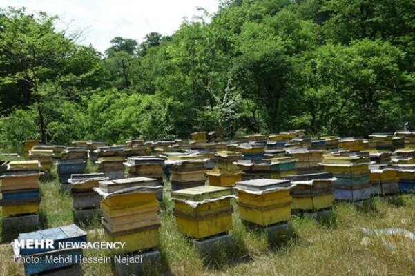 پرورش زنبور عسل در گردنه کوهستانی حیران