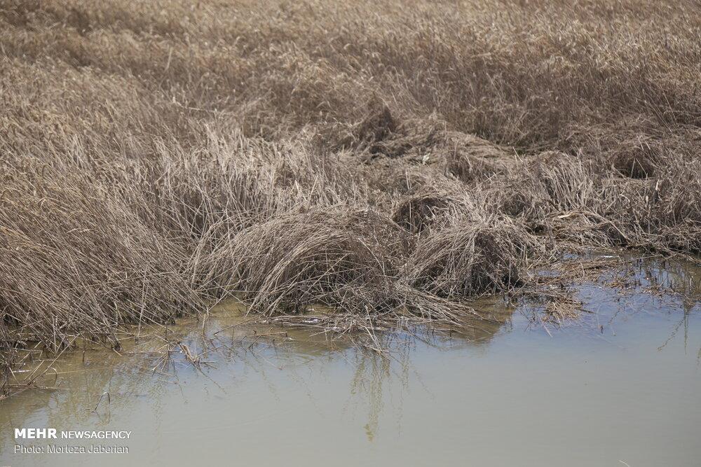 خسارات سیل به گندم زارهای خوزستان