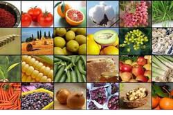 صادرات ۴۱۵ هزار تن انواع محصولات کشاورزی در مازندران