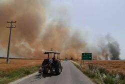 بیش از ۴۰ هکتارازاراضی کشاورزی مزرعه نمونه انبارالوم طعمه حریق شد