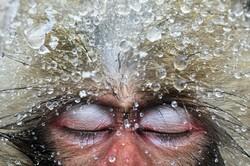 صور بورتريه جميلة من عالم الحيوان / صور
