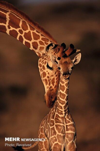 پرتره های زیبای حیوانات