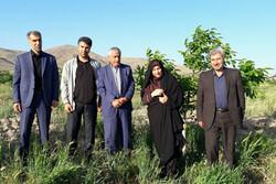 مشاور وزیر جهاد کشاورزی از باغ گردوی مدرن در قزوین بازدید کرد