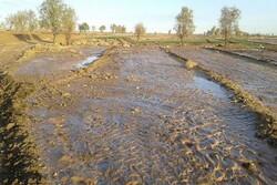 سیلاب در ۹۵ درصد اراضی کشاورزی استانهای سیلزده تخلیه شد
