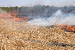 کشاورزانی که کیمیا خاکستر می کنند/ آلودگی؛ رهاورد شعلههای بیاطلاعی