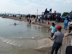 بازسازی ذخایر دریایی هدف رهاسازی بچه ماهیان است