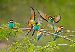 Vahşi doğadan seçilen haftanın fotoğrafları