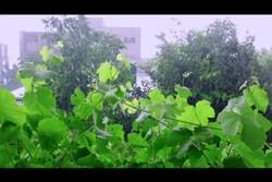 بارش رگباری باران یاسوج را فرا گرفت