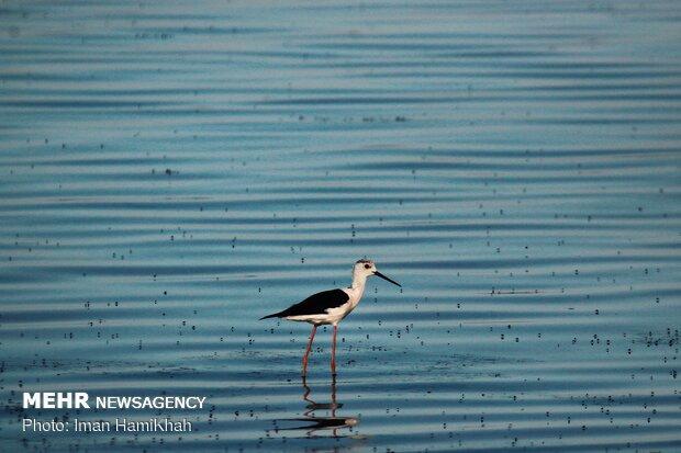 Return of migratory birds to Agh-Gol Wetland