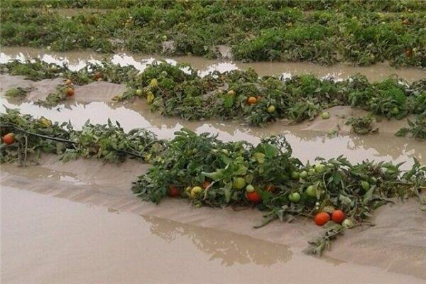 آخرین وضعیت پرداخت خسارت به سیلزدگان بخش کشاورزی