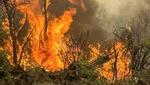 شروع مجدد آتش سوزی در مراتع مشرف به جنگلهای ارسباران