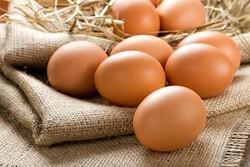 صادرات تخم مرغ به ١٠ هزارتن رسید / درگیری واحدهای مرغ گوشتی با بیماری نیوکاسل