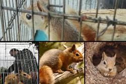 سفر بیبازگشت بلوطکاران از زاگرس تا تجریش/ سنجابهایی که از بازار سر درآوردند