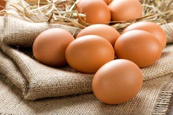 هر ایرانی سالانه ۲۰۰ عدد تخم مرغ میخورد/رشد ۱۱ درصدی تولید