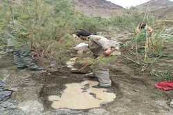 یک دهنه چشمه در کوه «ملک سیاه» زاهدان لایروبی و احیا شد